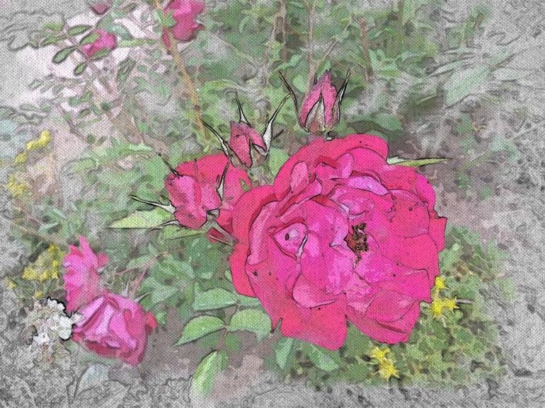 Watercolour Rose