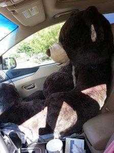 Passenger Bear