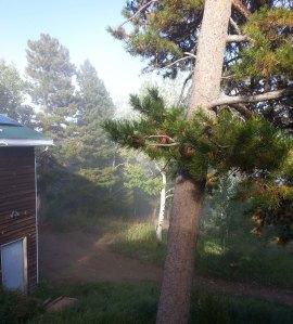 Afternoon Fog Frontyard