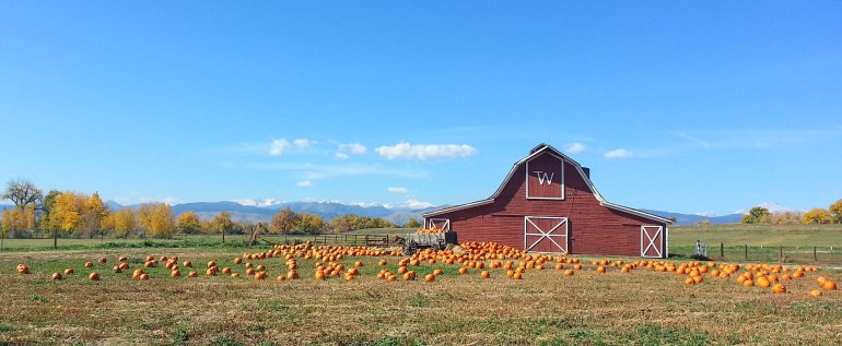 Barn and Pumpkins 3