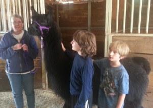 llamas - Boys with black llama