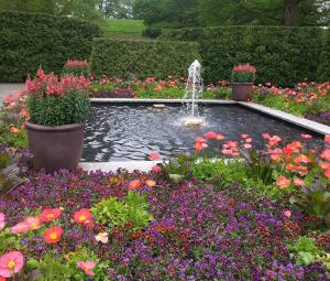 Icelandic poppies and Violas around a fountain at Longwood Garden.