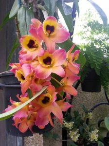 LG Orchids 1