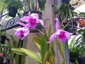 LG Orchids 2