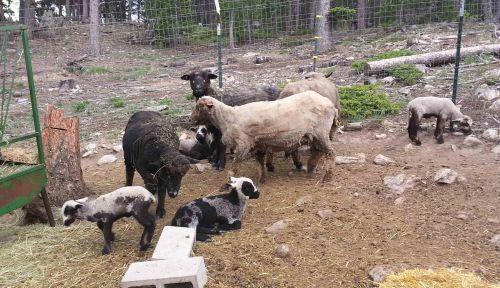 Margie's Herd