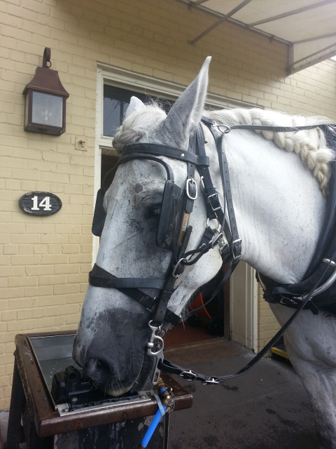 Our Carriage Horse - Bill 2