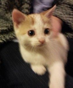 artsy-kitten-pic